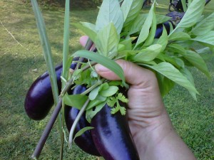Japanese Eggplant, Thai Basil and Lemon Grass 